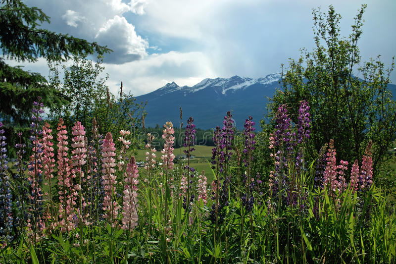 De lentebloemen, BC Weg B.C. Canada royalty-vrije stock fotografie