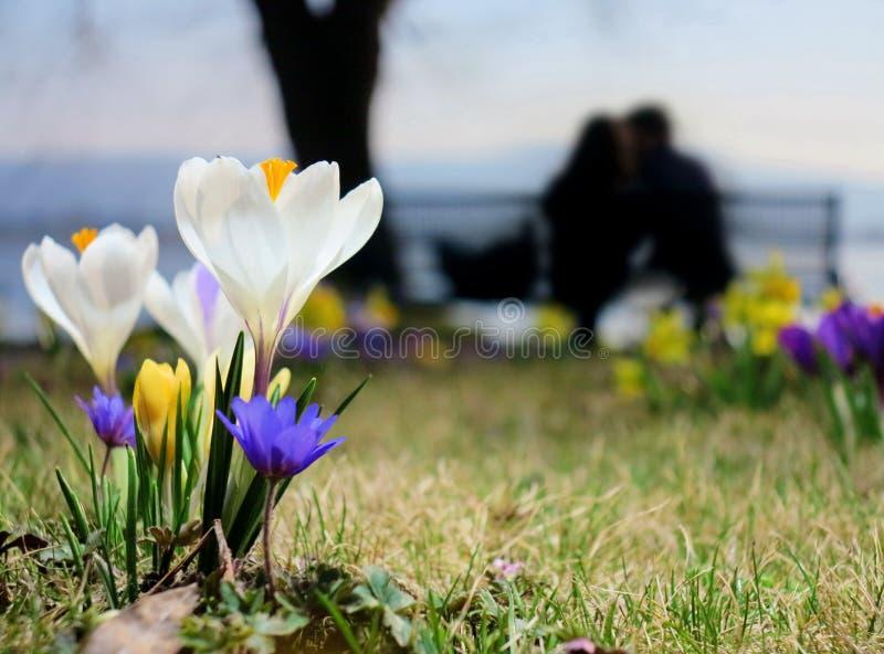 De lentebloemen in een bloembed royalty-vrije stock fotografie