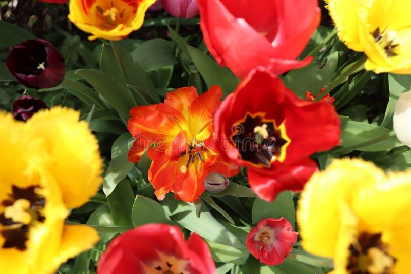 De lentebloemen in een tuin in Duitsland royalty-vrije stock fotografie