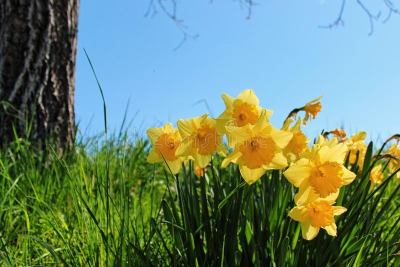 De lentebloemen en perfecte zonnige dag, Duitsland stock fotografie
