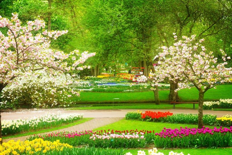 De lentebloemen in het park van Holland stock foto