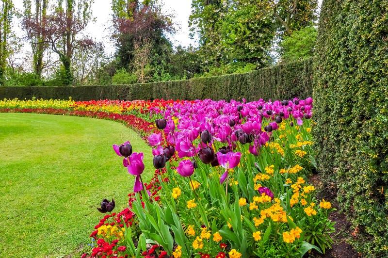 De lentebloemen in het park van de Regent, Londen, het Verenigd Koninkrijk stock foto