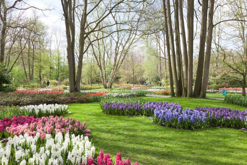De lentebloemen in Keukenhof--Tulpentuin Nederland stock afbeeldingen