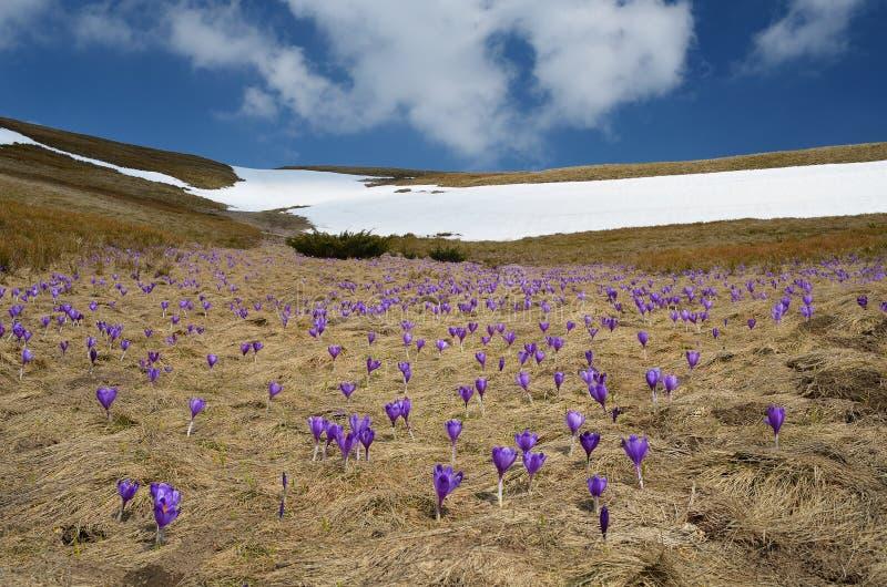 De lentebloemen op de weide royalty-vrije stock foto's