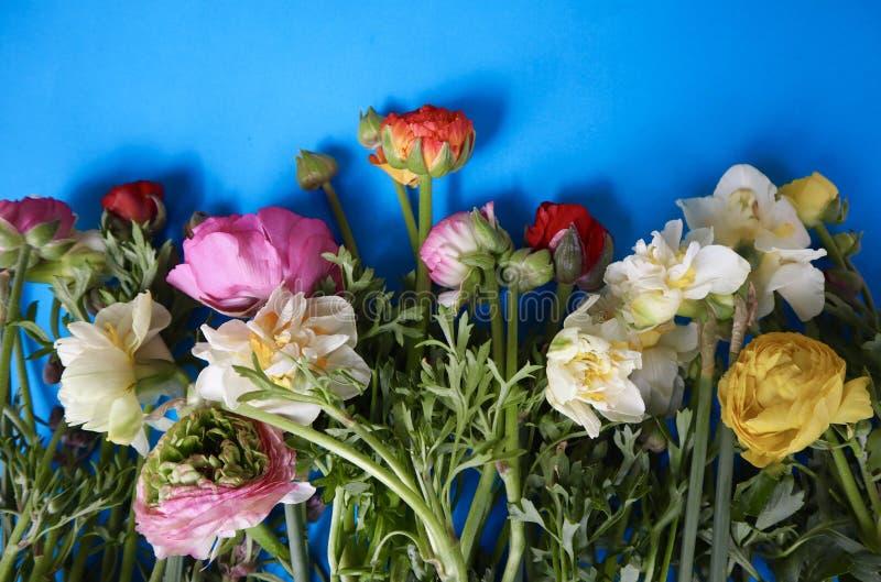 De lentebloemen op een Heldere Blauwe Achtergrond stock afbeelding