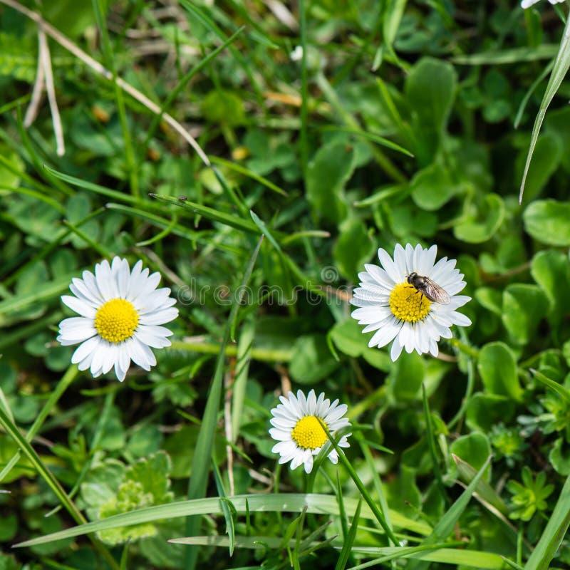 Download De lentebloemen op groen stock afbeelding. Afbeelding bestaande uit summer - 54077749
