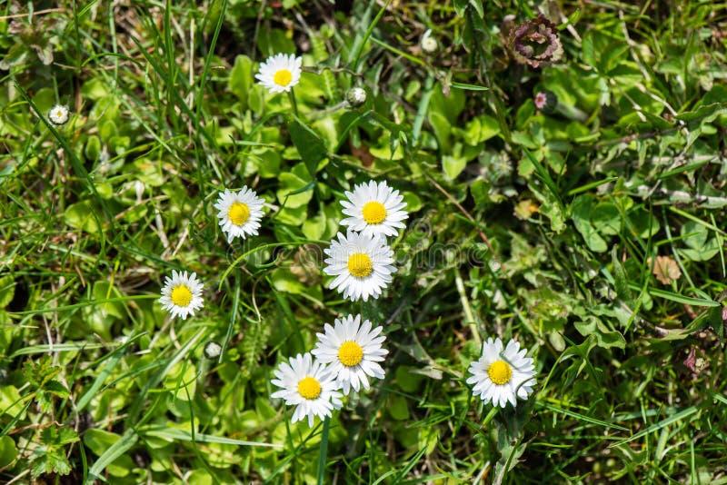 Download De lentebloemen op groen stock foto. Afbeelding bestaande uit boerderij - 54077832