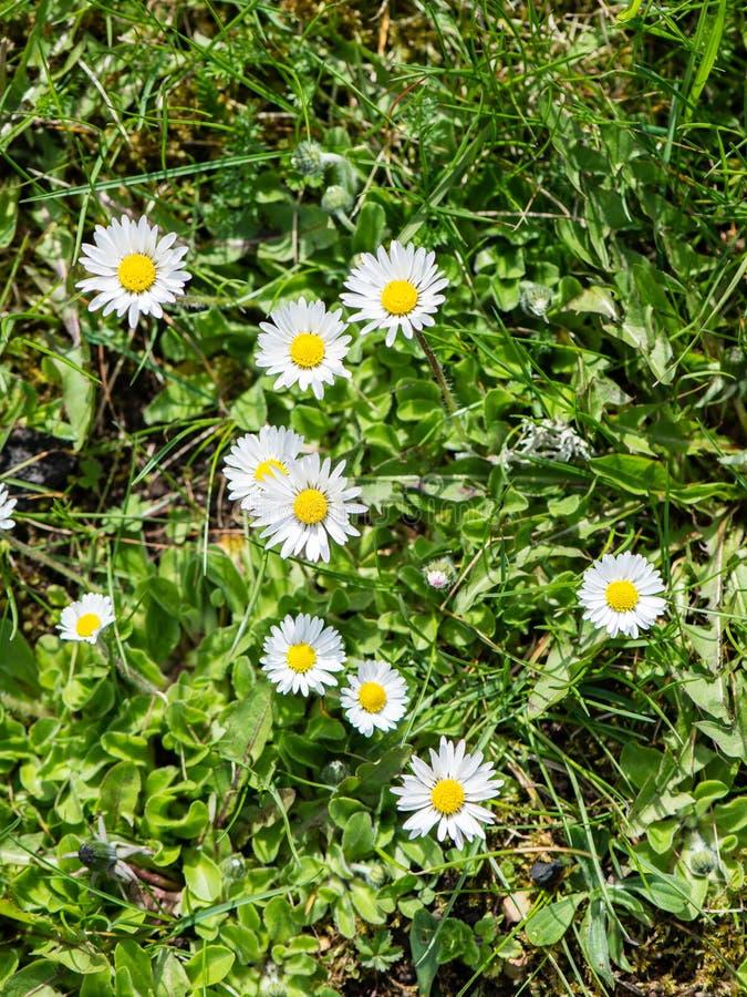 Download De lentebloemen op groen stock foto. Afbeelding bestaande uit huisvesting - 54077866
