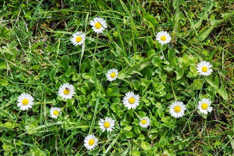 Download De lentebloemen op groen stock afbeelding. Afbeelding bestaande uit landbouwbedrijf - 54077883