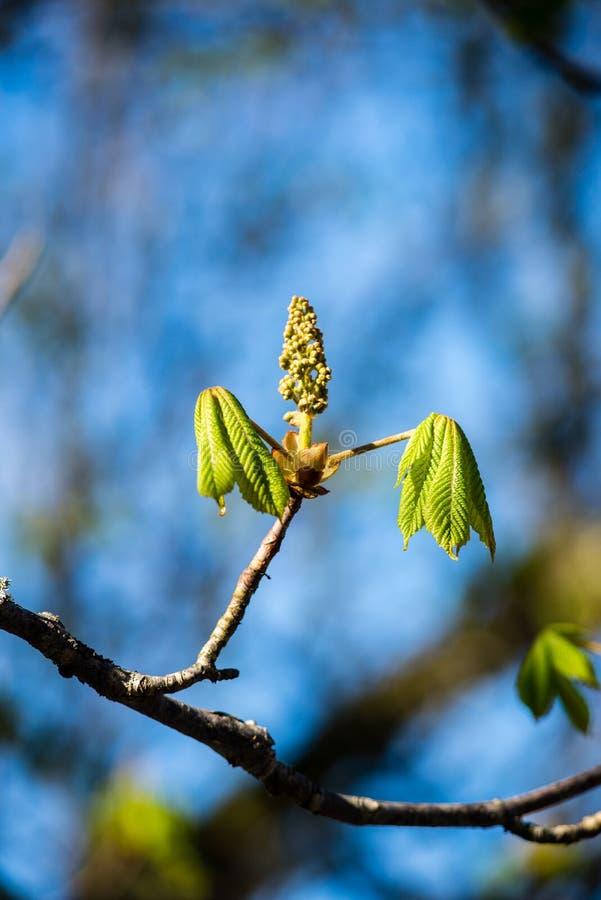Download De lentebloemen op groen stock afbeelding. Afbeelding bestaande uit spring - 54077917