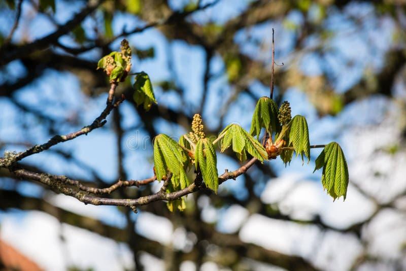 Download De lentebloemen op groen stock afbeelding. Afbeelding bestaande uit gras - 54077935