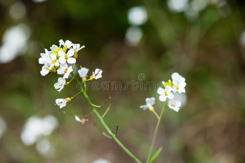 Download De lentebloemen op groen stock afbeelding. Afbeelding bestaande uit gebied - 54077977