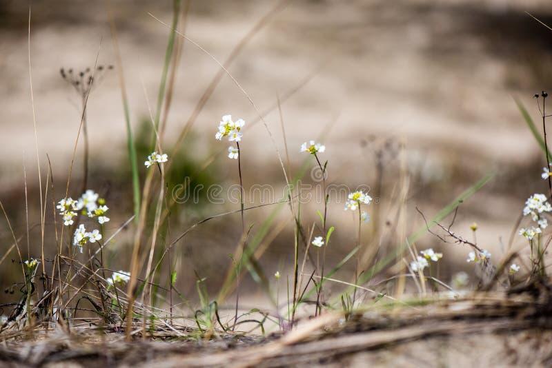Download De lentebloemen op groen stock afbeelding. Afbeelding bestaande uit groen - 54078013