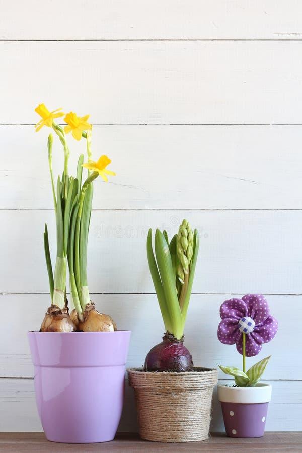De lentebloemen in potten op een witte houten achtergrond Narcissen en hyacint royalty-vrije stock fotografie