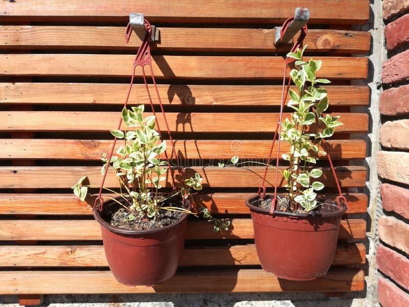 De lentebloemen in potten op houten achtergrond royalty-vrije stock fotografie