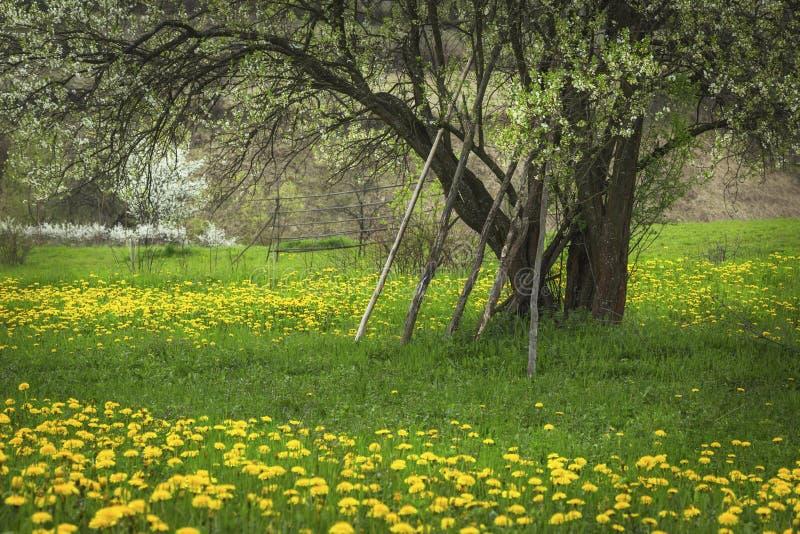 Download De Lentebloemen Van De Paardebloem Field Stock Foto - Afbeelding bestaande uit groei, kleurrijk: 54075402