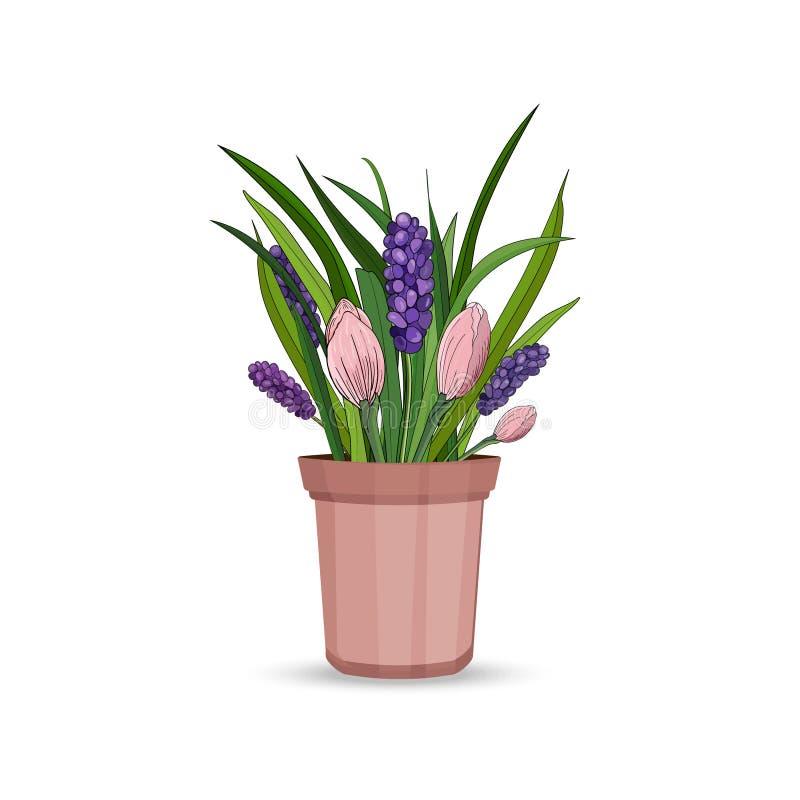 De lentebloemen van hyacint en tulpen met bladeren in een bloempot op een witte achtergrond Vector royalty-vrije illustratie
