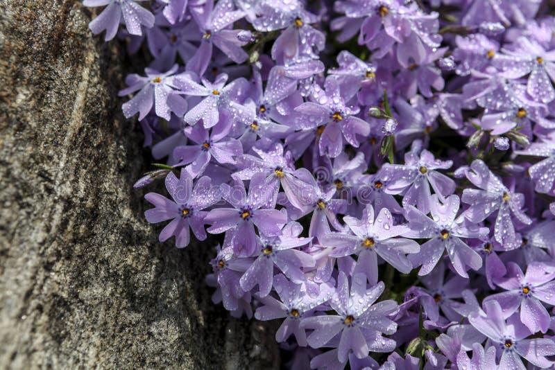 De lentebloemen in volledige bloei royalty-vrije stock foto