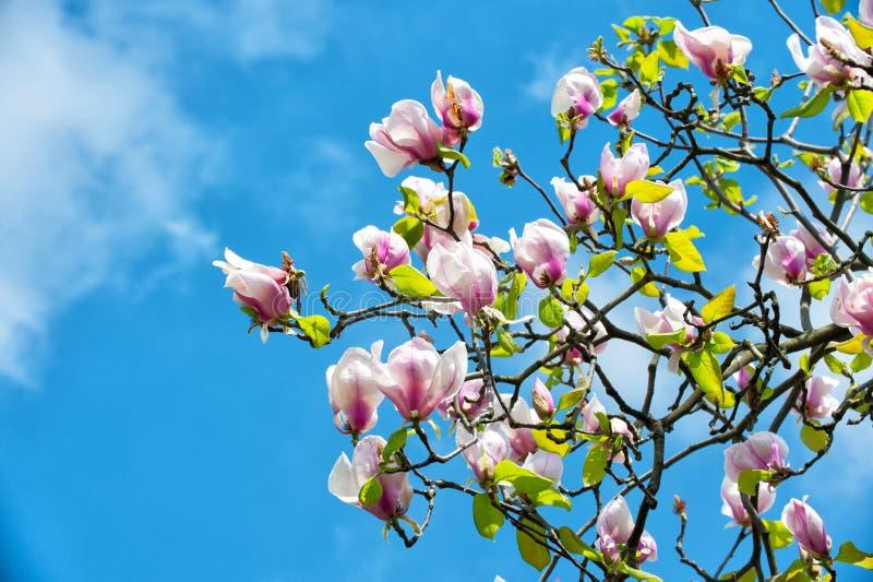 De lentebloesem, aard, schoonheid stock foto