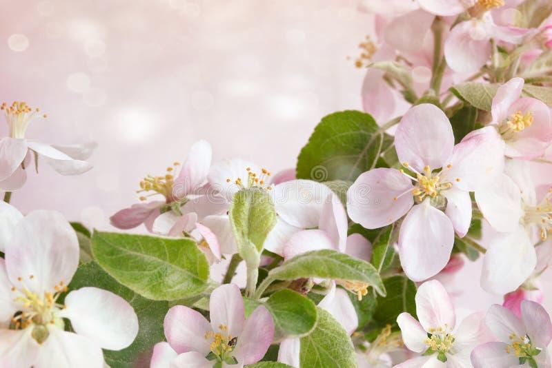 De lentebloesems tegen roze achtergrond stock afbeelding
