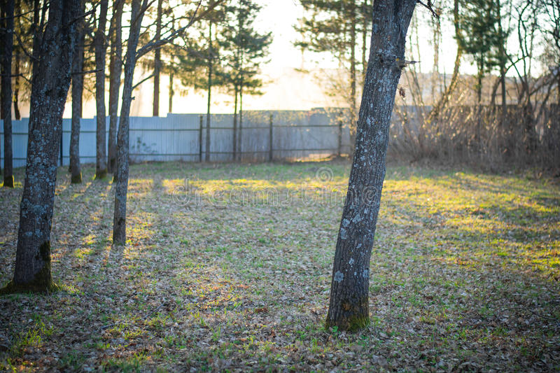De lentebomen in het arboretum bij zonsondergang royalty-vrije stock afbeeldingen