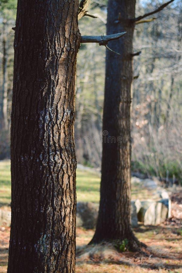 De lentebomen van Boston in binnenplaats royalty-vrije stock afbeeldingen