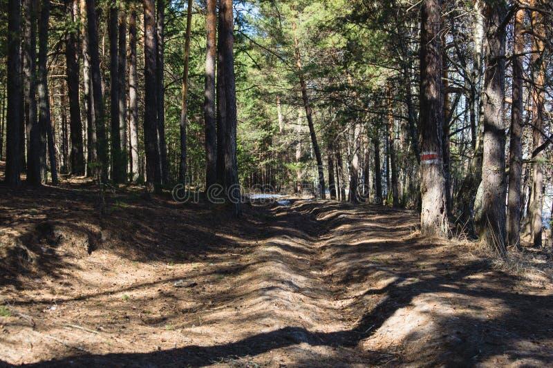 De lentebos met een boom duidelijk voor registreren stock foto