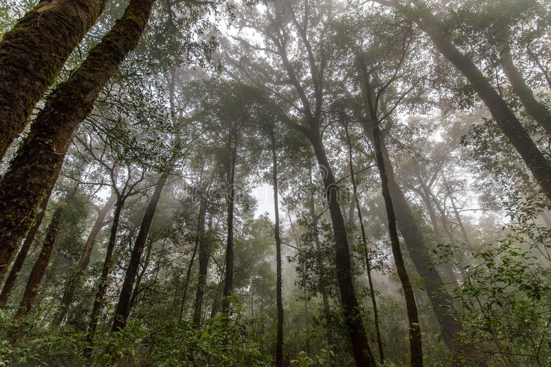 De lentebos in Mist stock afbeeldingen
