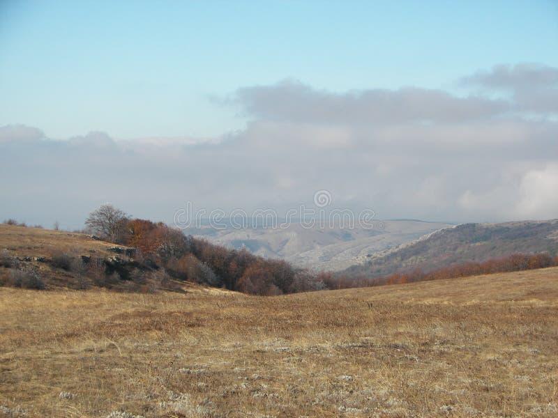 De lentebos in de ochtend in de Krimbergen royalty-vrije stock fotografie