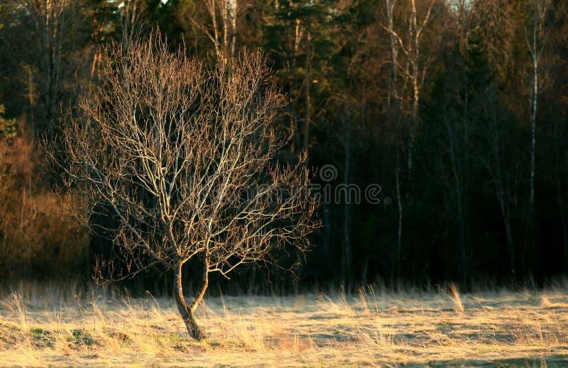 De lentebos op tijd van zonsondergang royalty-vrije stock afbeeldingen