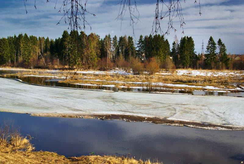 De lentebos zonder bladeren Rusland stock foto
