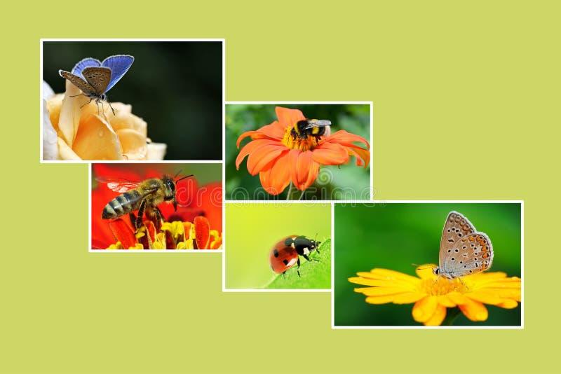 De lentecollage met bloeiende installaties en insecten voor uw projec stock foto's