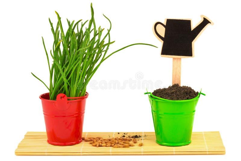 De lenteconcept met gras, grond, zaden in de emmers stock fotografie