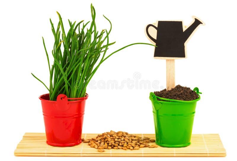 De lenteconcept met gras, grond, zaden in de emmers stock foto's