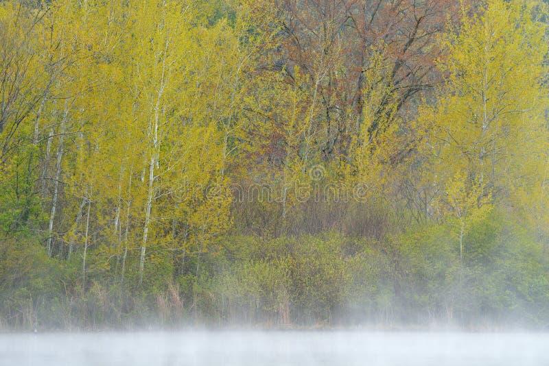 De lenteespen Hall Lake royalty-vrije stock afbeelding