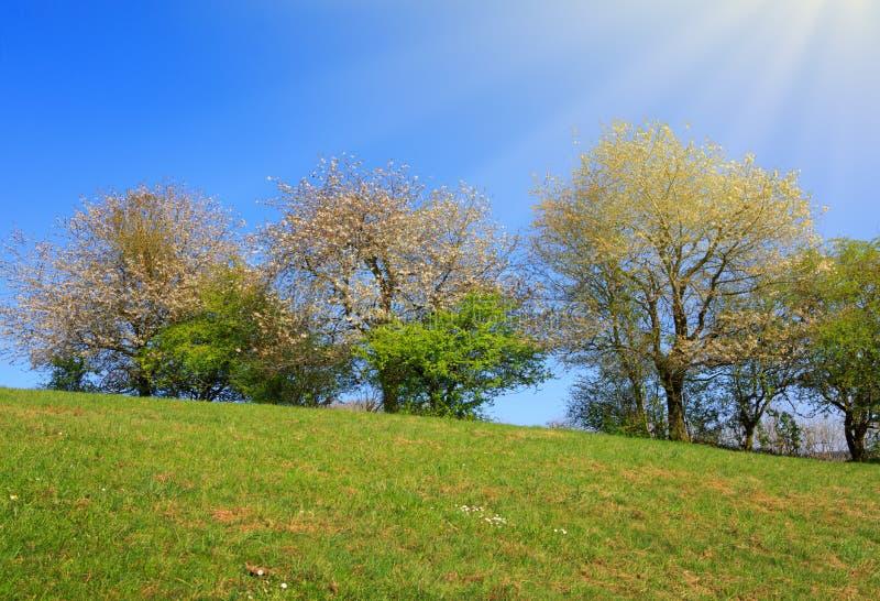 De lentegebied van gras en bloeiende bomen met blauwe hemel en zonlicht stock fotografie
