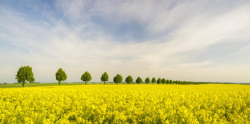 De lentegebieden stock foto's
