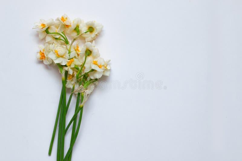 De lentegele narcissen bouqet op de witte achtergrond met lege ruimte royalty-vrije stock afbeeldingen