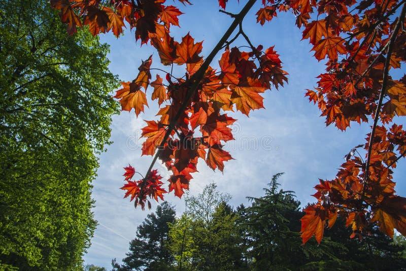 De lentekleuren royalty-vrije stock afbeelding