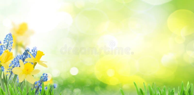 De lenteklokjes en gele narcissen royalty-vrije stock afbeeldingen