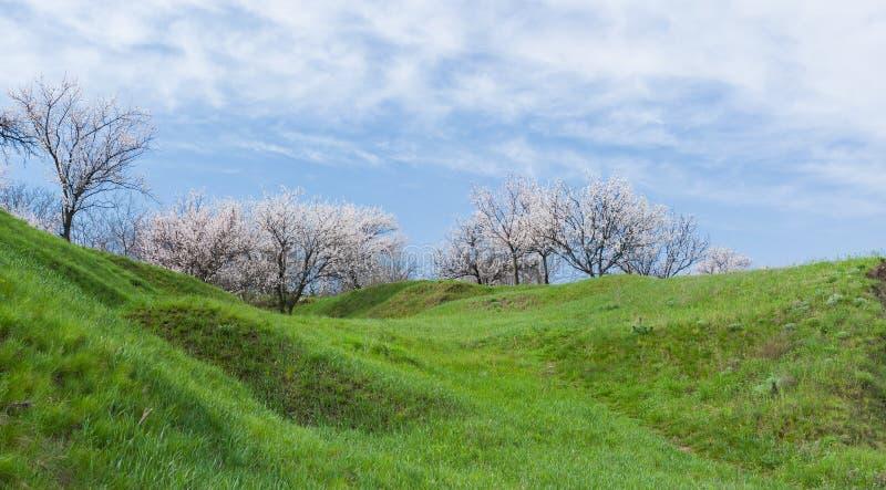 De lentelandschap. stock foto's