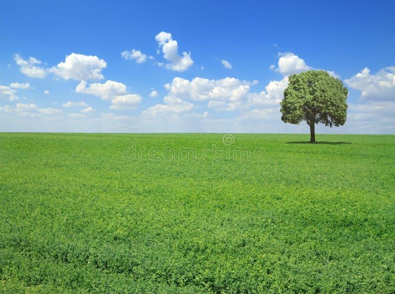 De lentelandschap royalty-vrije stock afbeelding