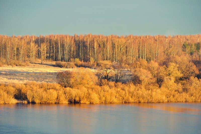 De lentelandschap - bos door zonlicht in uitstekende tonen wordt aangestoken gelijk te maken die stock foto's