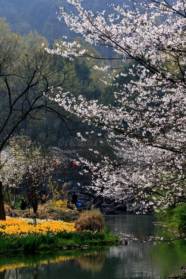 De lentelandschap in Hangzhu-park royalty-vrije stock afbeelding