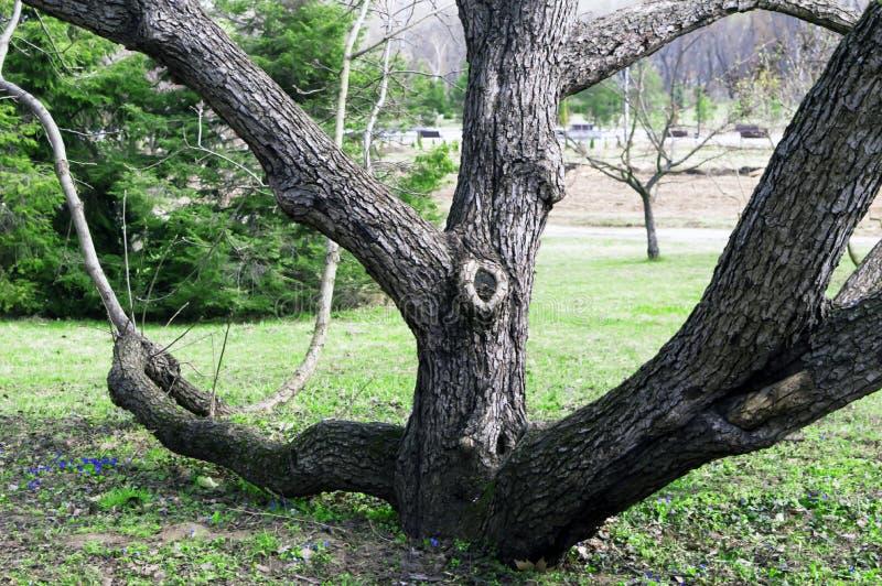 De lentelandschap in het park royalty-vrije stock fotografie