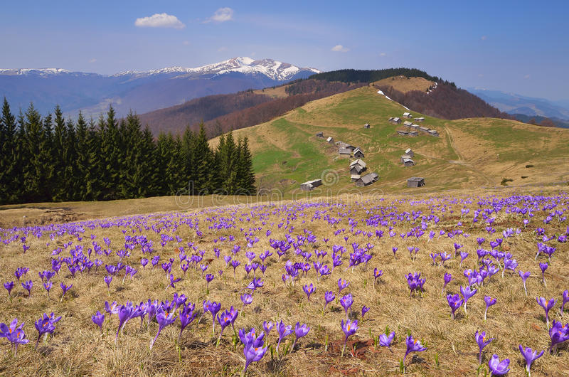 De lentelandschap met bloemen in de bergen royalty-vrije stock foto