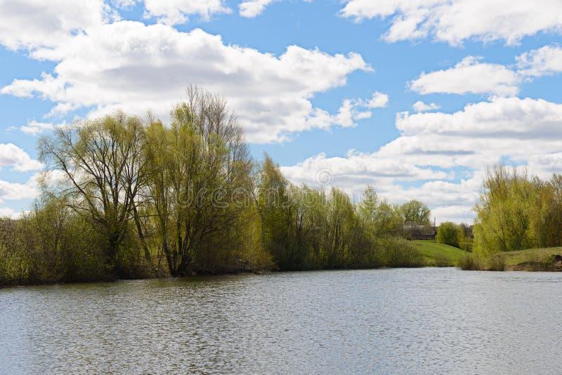De lentelandschap met bomen door de vijver royalty-vrije stock foto's
