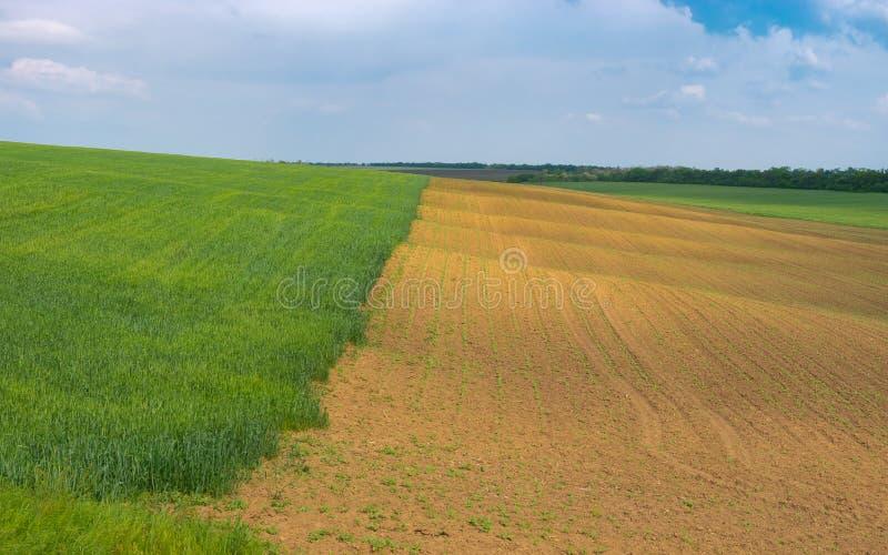 De lentelandschap met golvend tarwegebied naast zonnebloem  stock foto's