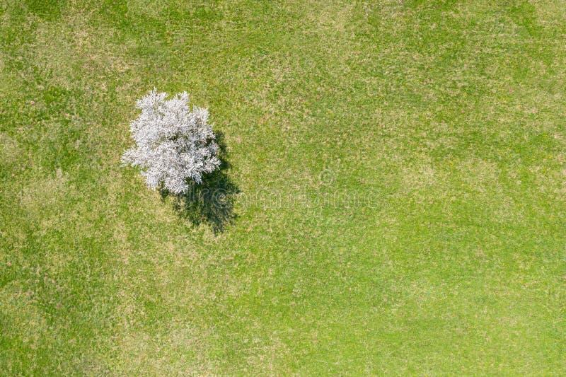 De lentelandschap met kersenboom in bloesem Lucht Mening stock afbeelding