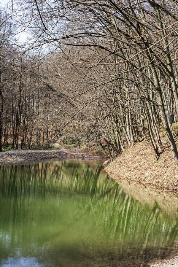 De lentelandschap met meer in bos royalty-vrije stock afbeelding